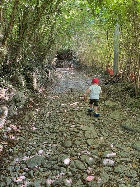Bambino cammina nel bosco