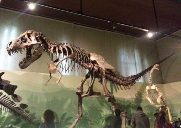 scheletro tirannosauro