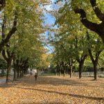File di alberi in autunno