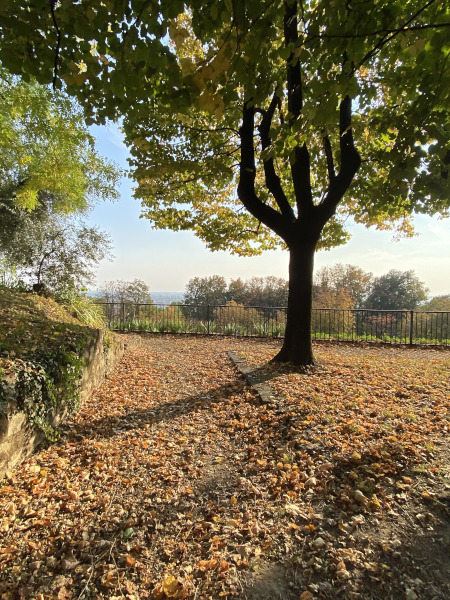Foliage in Lombardia