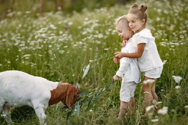 Bambine guardano una capretta