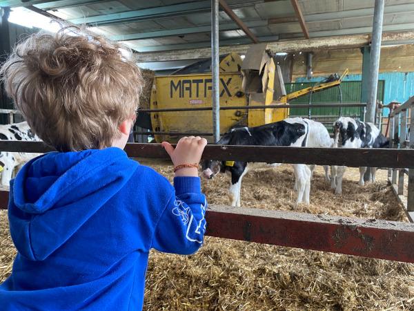 bambino guarda le mucche